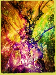 Magickal Tree Blessings