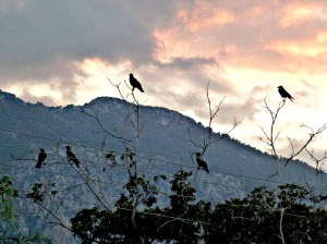 five-crows-1